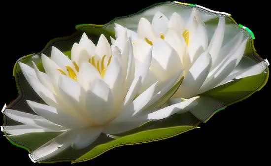 tubes_fleurs_tiram_185