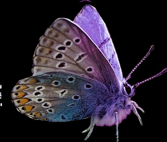 tubes_papillon_tiram_515