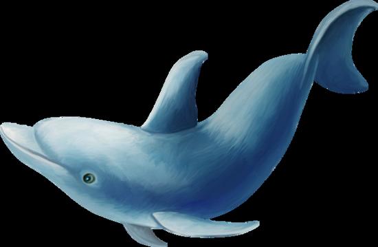 tubes_dauphins_tiram_133