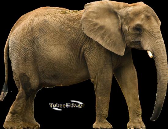 tubes_elephants_tiram_112