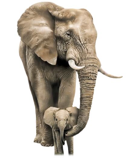 tubes_elephants_tiram_120