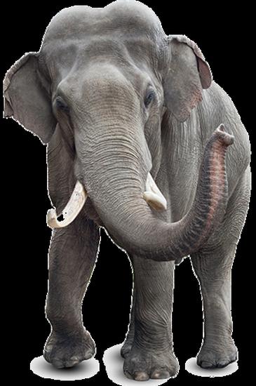 tubes_elephants_tiram_214