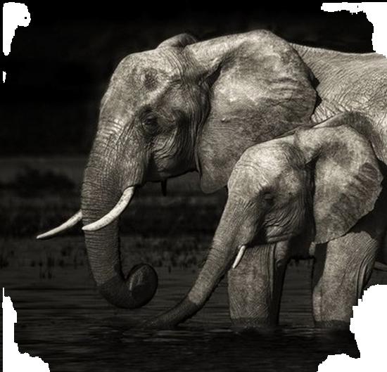 tubes_elephants_tiram_48