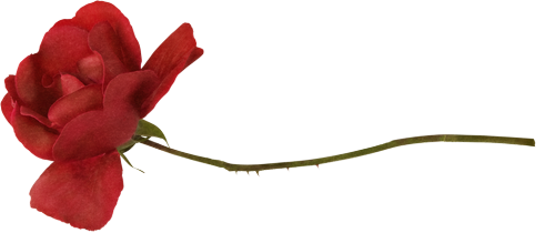 tubes_fleurs_saint_valentin_tiram_221