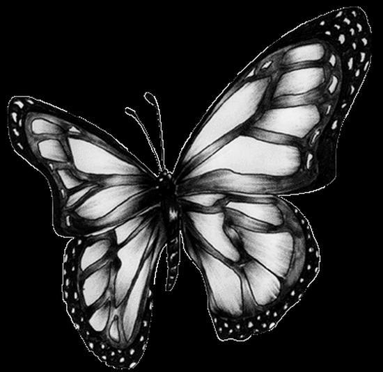 tubes_papillon_tiram_728