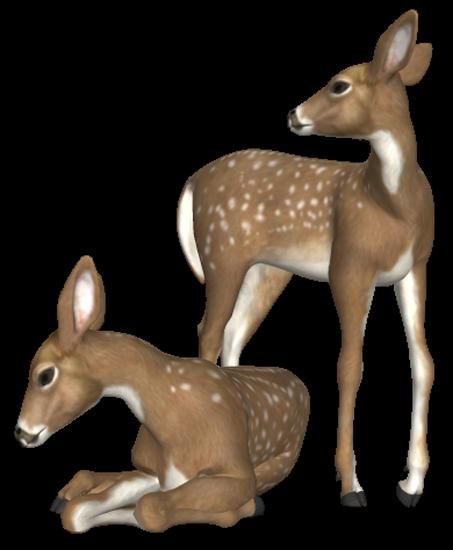 animaux-noel-tiram-65