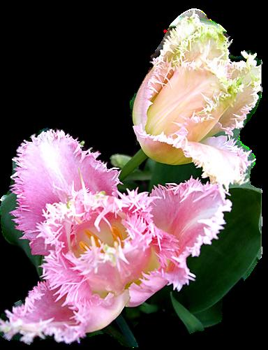 tubes_fleurs_tiram_817