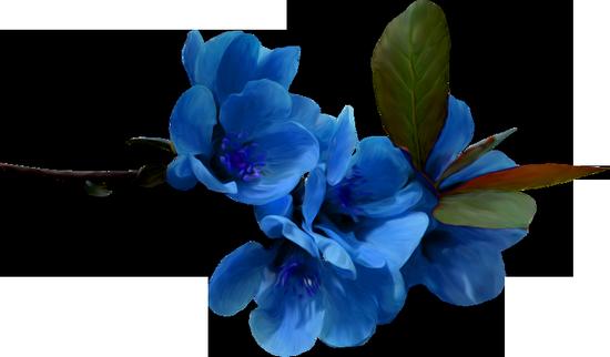 tubes_fleurs_tiram_165