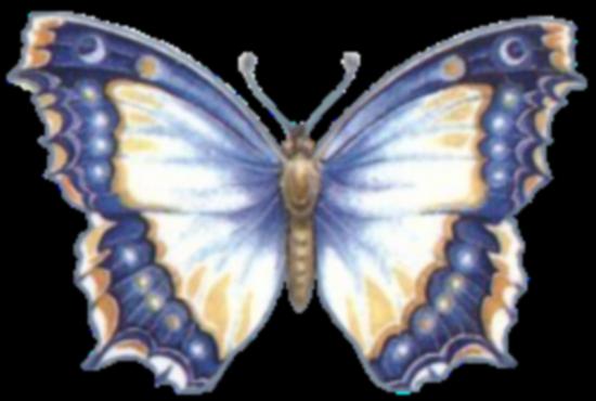 tubes_papillon_tiram_731