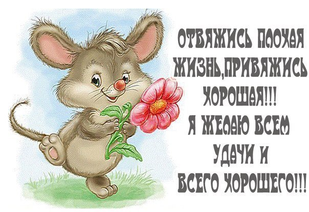 http://image.ibb.co/kpgQQo/front.jpg