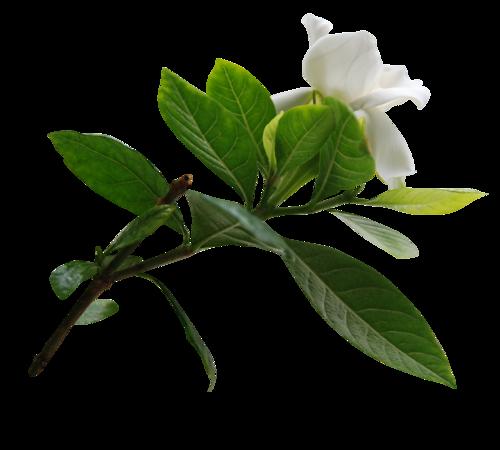 fleurs_paques_tiram_8
