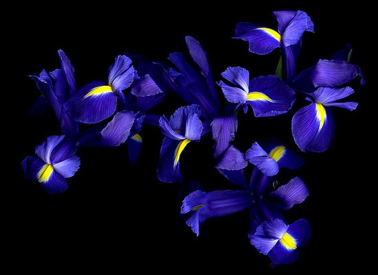 tubes_fleurs_tiram_211