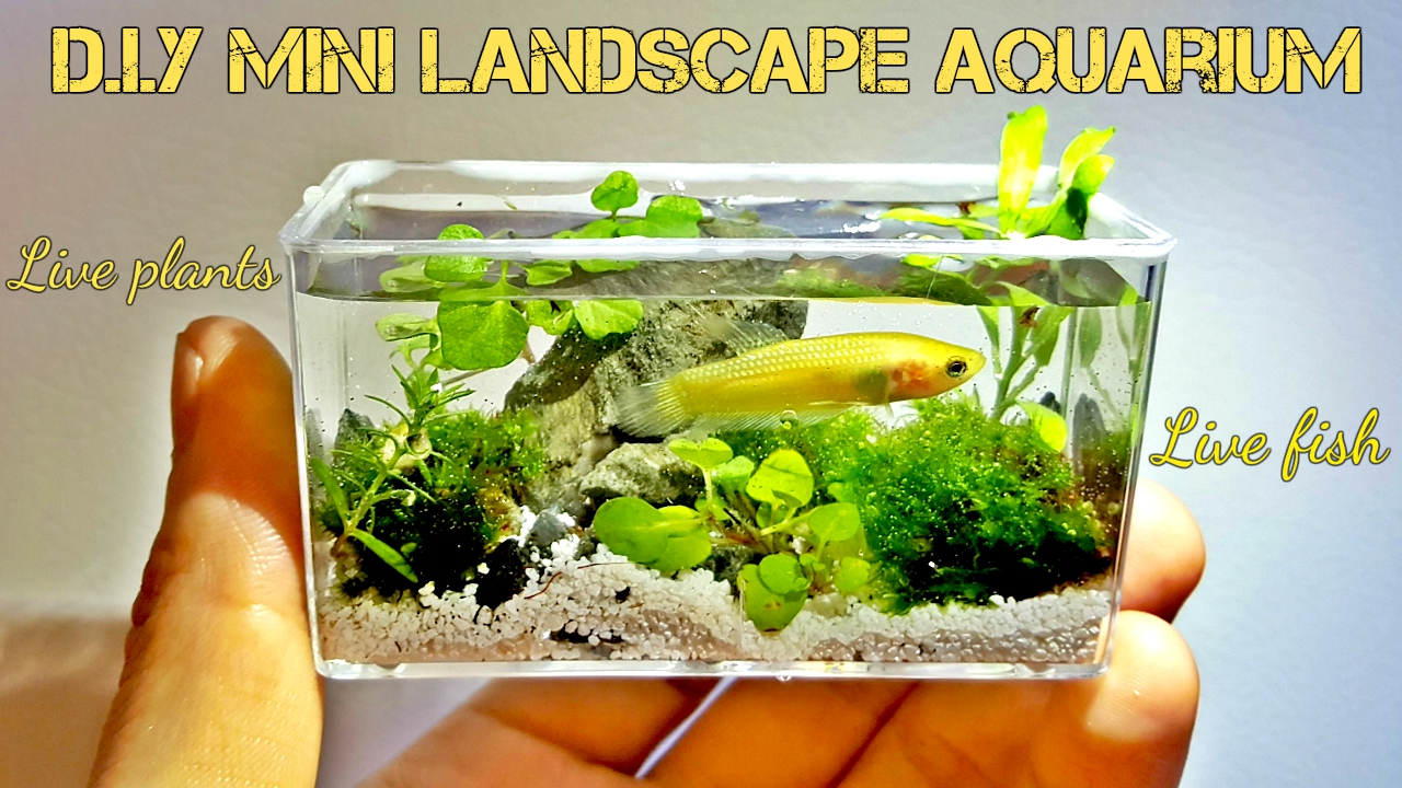 my diy mini aquarium fish tank live landscape aquarium aquarium advice aquarium forum. Black Bedroom Furniture Sets. Home Design Ideas