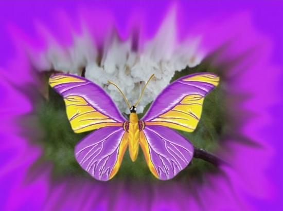 tubes_papillon_tiram_362