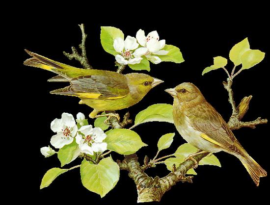 tubes_oiseaux_tiram_183