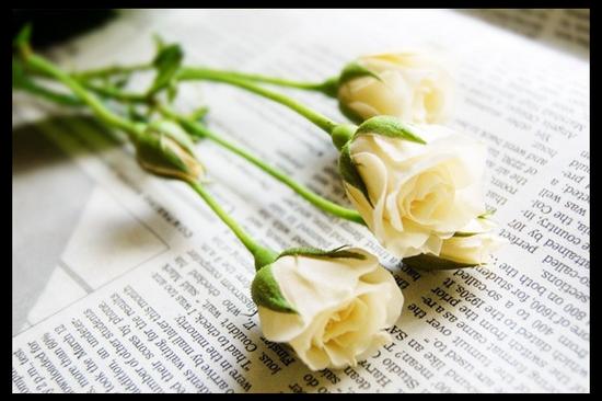 tubes_fleurs_tiram_271
