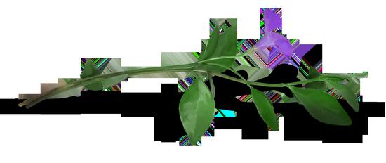 tubes_fleurs_tiram_457