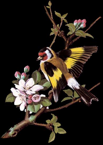 tubes_oiseaux_tiram_239