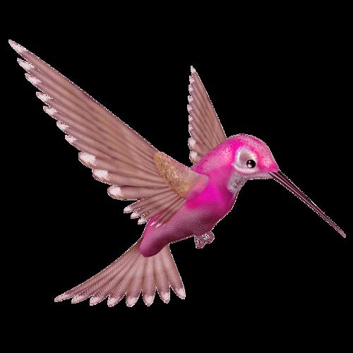 tubes_oiseaux_tiram_86