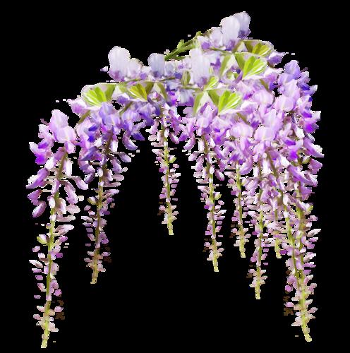 tubes_fleurs_tiram_589