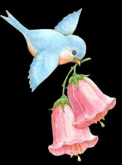tubes_oiseaux_tiram_227