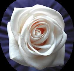 tubes_fleurs_saint_valentin_tiram_137