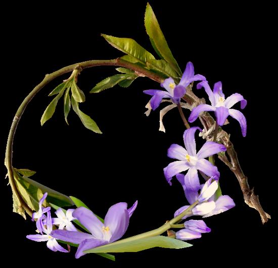 tubes_fleurs_tiram_112