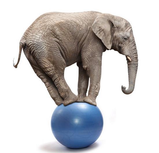 tubes_elephants_tiram_483
