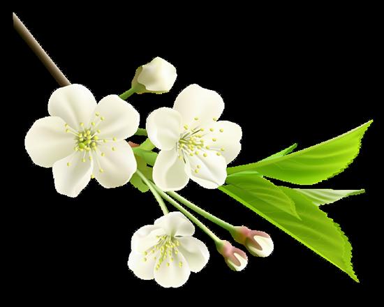tubes_fleurs_tiram_381