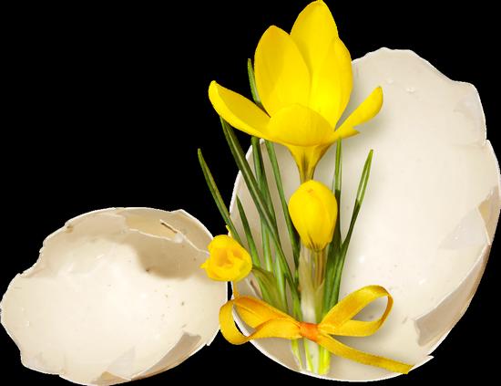 fleurs_paques_tiram_267
