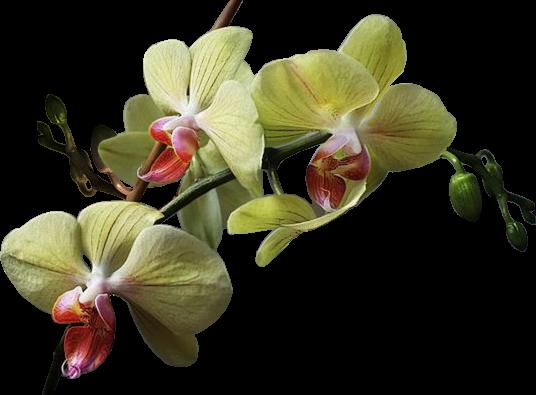 tubes_fleurs_tiram_920