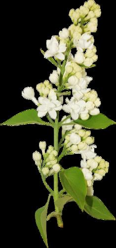 fleurs_paques_tiram_178