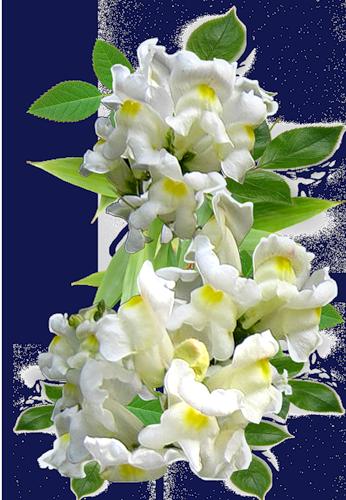 fleurs_paques_tiram_20