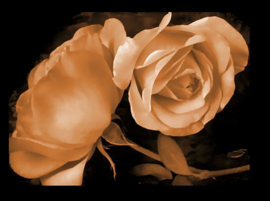 tubes_fleurs_tiram_311