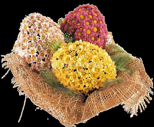 fleurs_paques_tiram_286