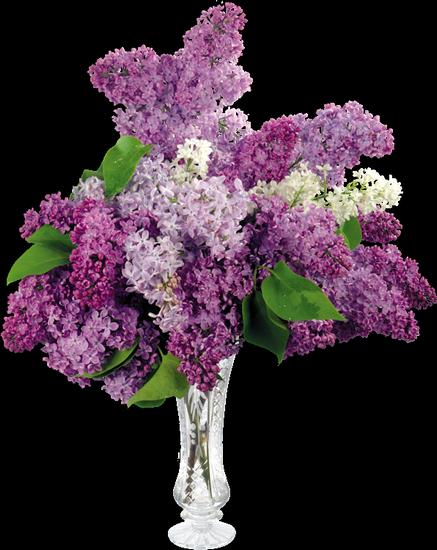 tubes_fleurs_tiram_156