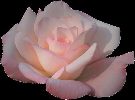 tubes_fleurs_tiram_773