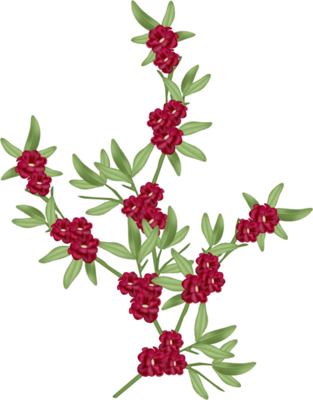tubes_fleurs_saint_valentin_tiram_106
