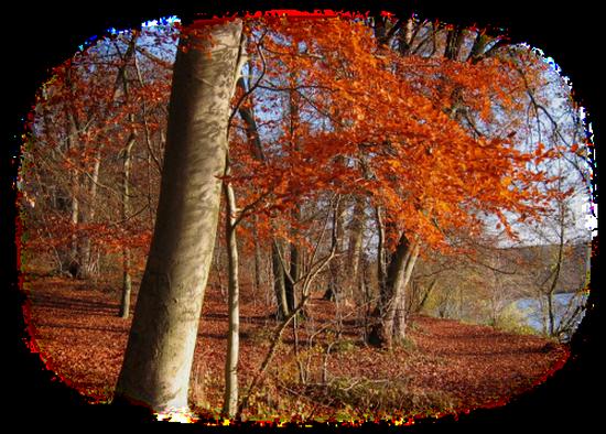 paysage_tiram_403