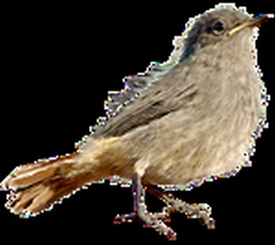 tubes_oiseaux_tiram_66