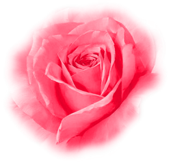 tubes_fleurs_saint_valentin_tiram_122
