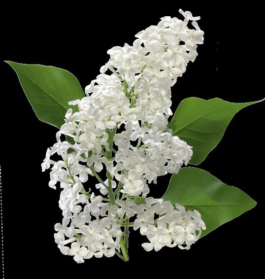 tubes_fleurs_tiram_155