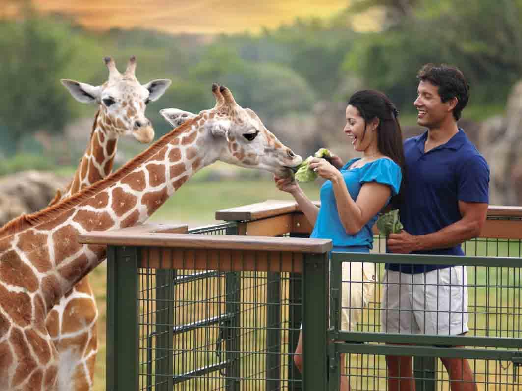 Serengeti Safari at Busch Gardens