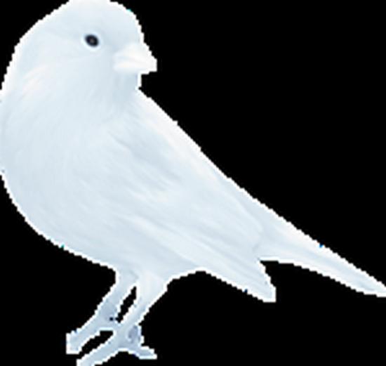 tubes_oiseaux_tiram_71