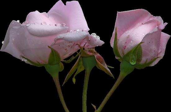tubes_fleurs_tiram_168
