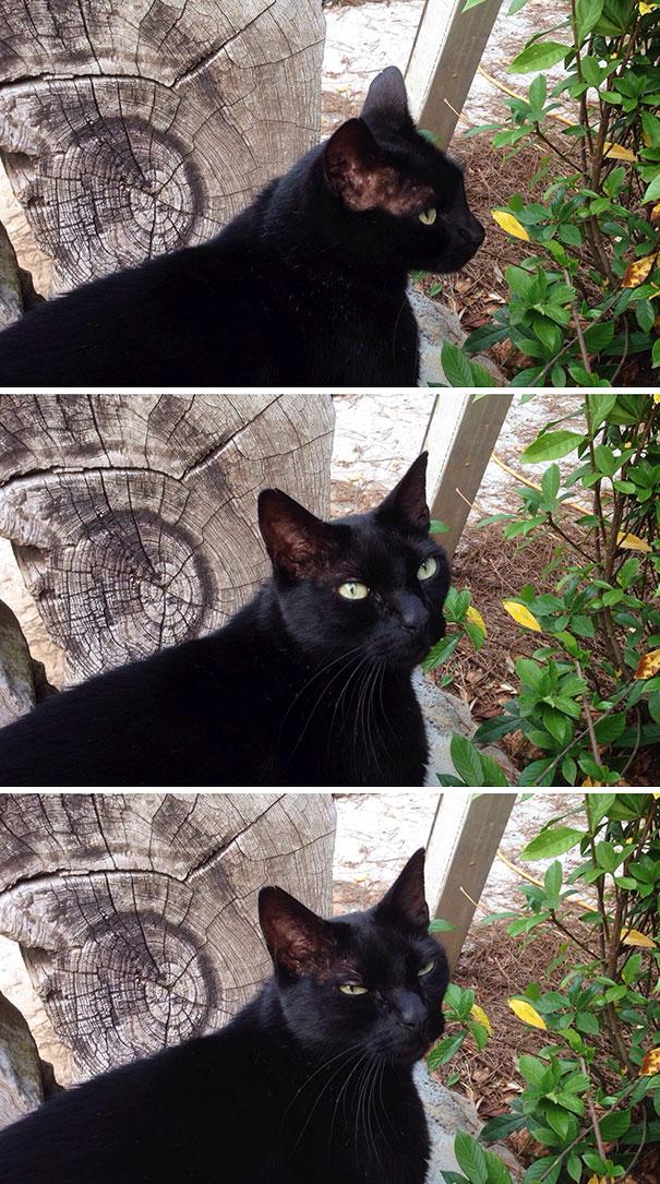 gatos que não gostam de fotos
