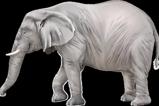 tubes_elephants_tiram_493