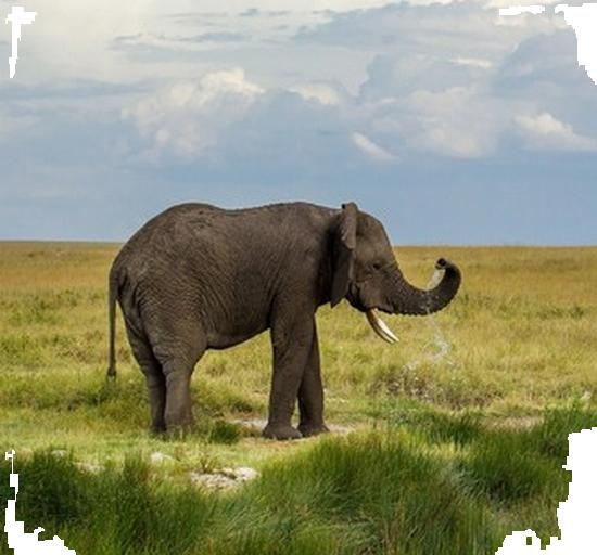 tubes_elephants_tiram_501