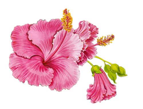 tubes_fleurs_tiram_691