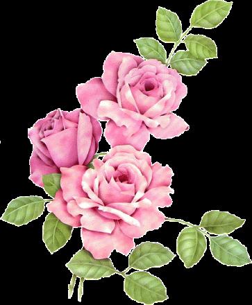 tubes_fleurs_tiram_837